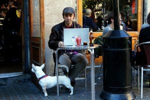 hond op café