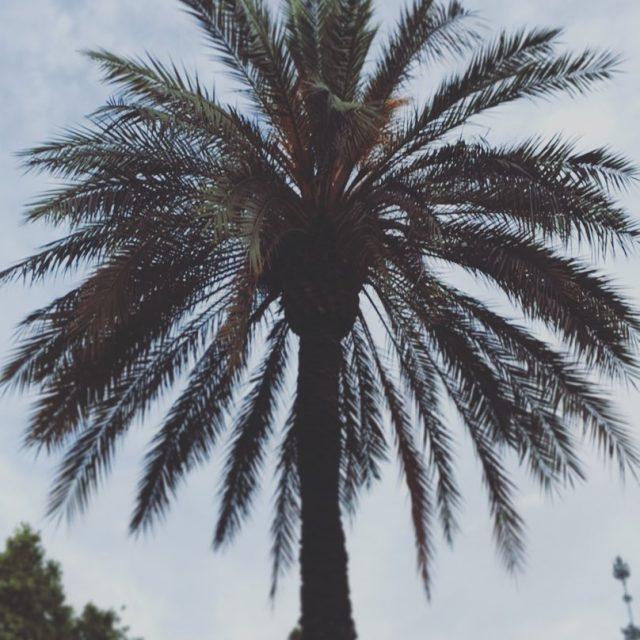 Do you like palmtrees? barcelonalife barcelonagram catalunya wonderful photooftheday spainhellip