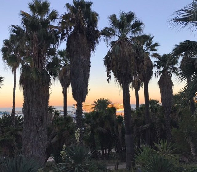 PALM TREES EVERYWHERE  barcelona bcn atardecer spain catalunya vistashellip