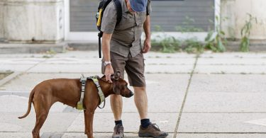 hond met baas in de stad