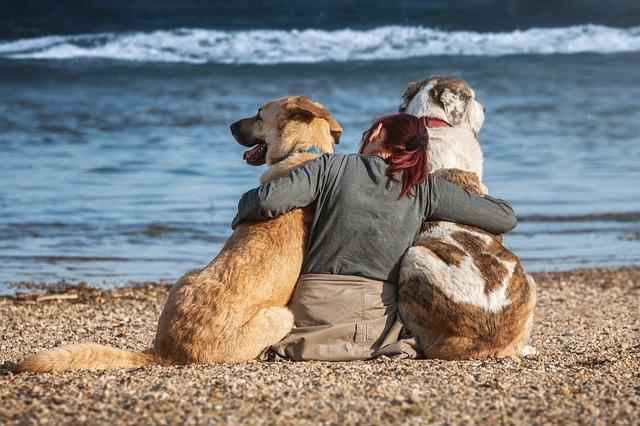 twee honden en vrouw op strand