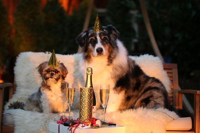 honden tijdens feestdagen
