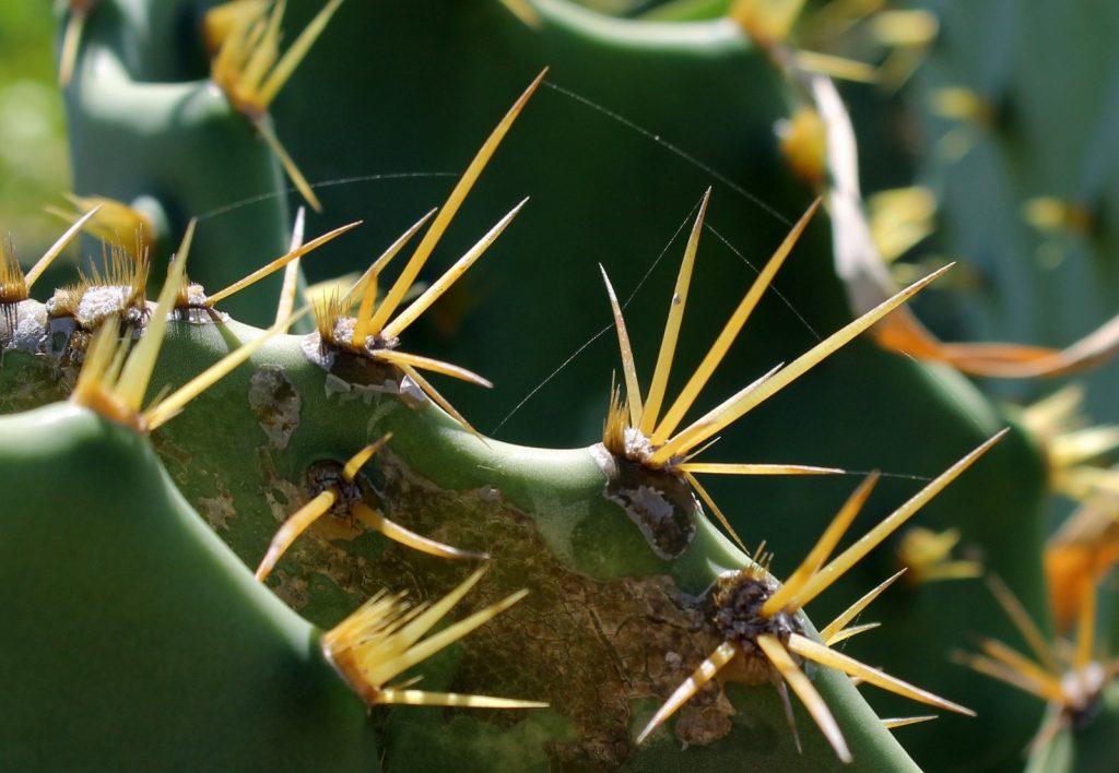 close-up van cactus