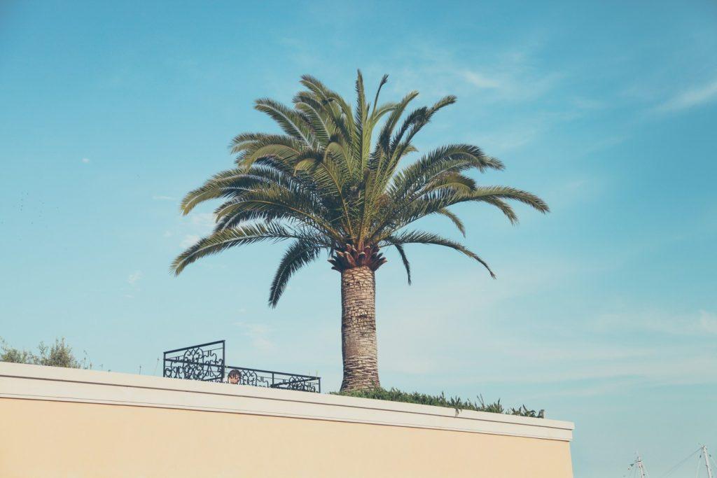 palmboom op terras