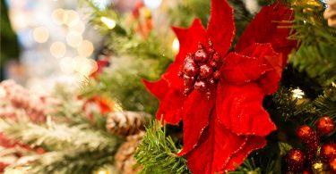 rode kerstroos in kerstboom met lichtjes