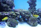 vissen aquarium barcelona