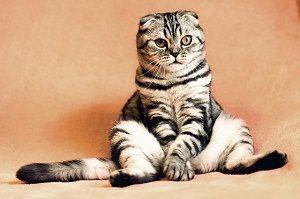 kat zit rechtop