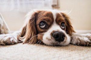 hondje op de bank