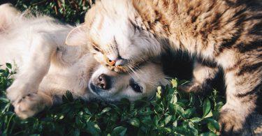 hond en kat op gras