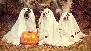 pompoen met drie hondjes in witte lakens