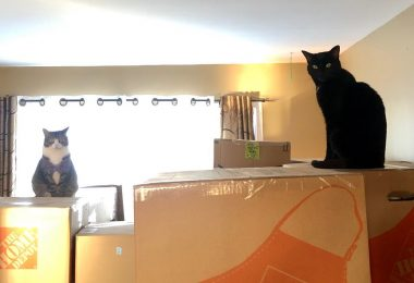 katten bovenop verhuisdozen