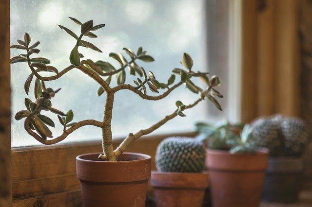plantjes voor het raam