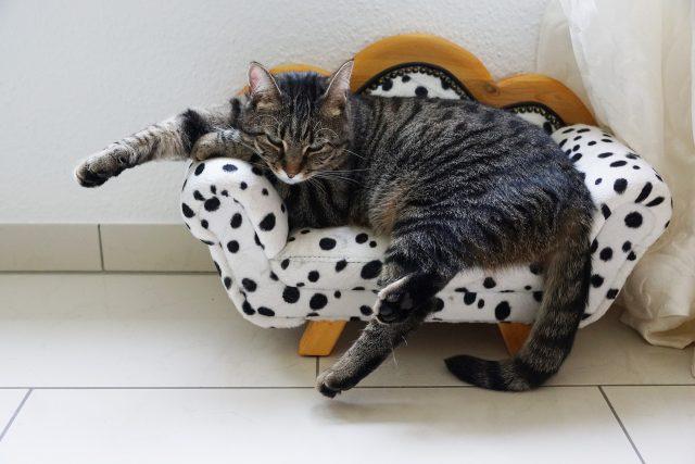kat op speciaal kattenbed