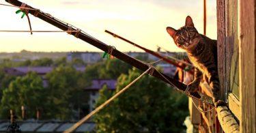 kat kijkt vanaf terras